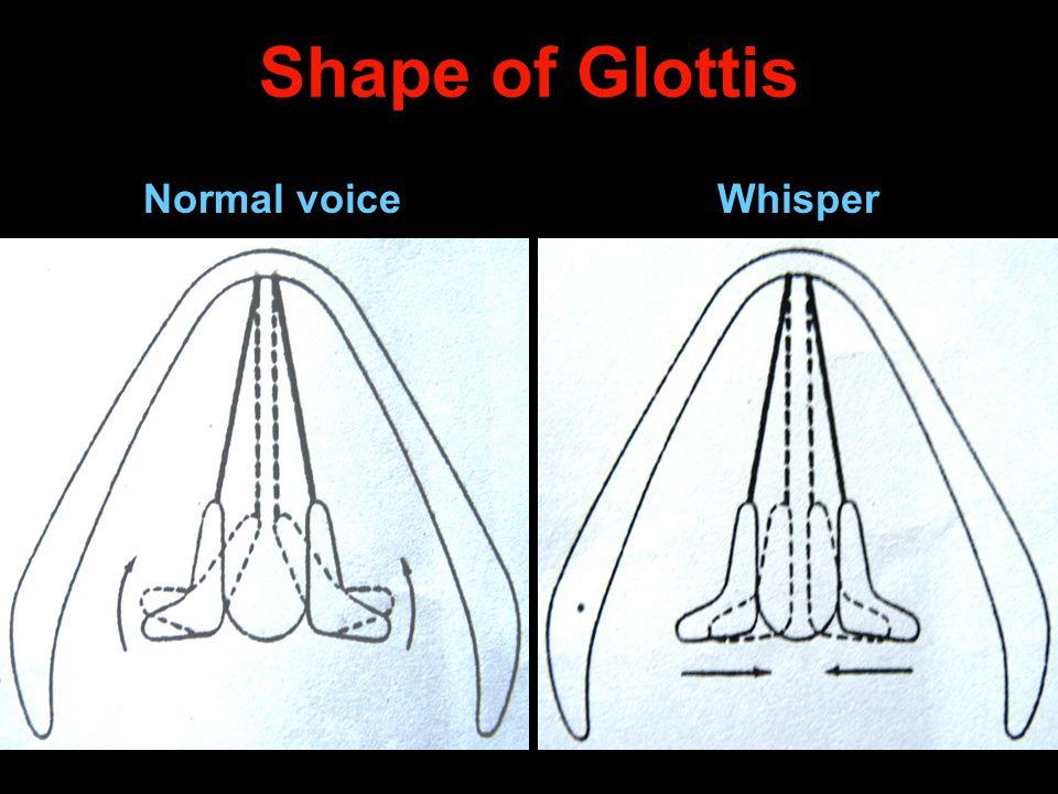 Shape of Glottis Normal voice Whisper