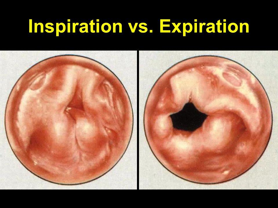 Inspiration vs. Expiration