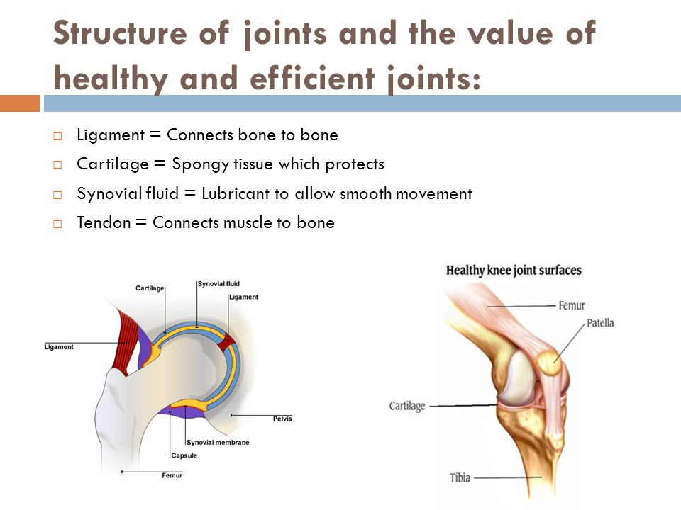 Structure of joints and the value of healthy and efficient joints: