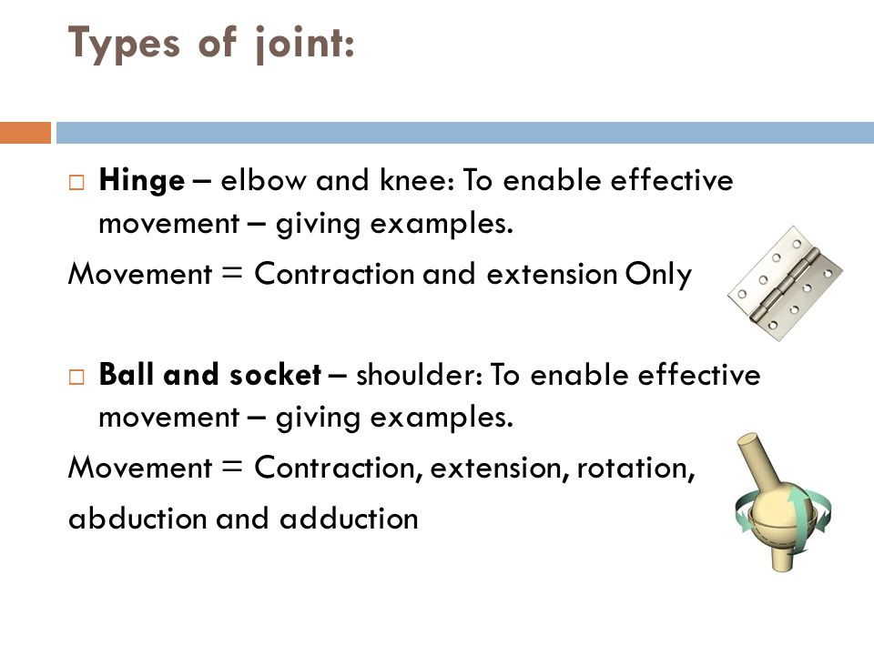Types of joint: Hinge – elbow and knee: To enable effective movement – giving examples. Movement = Contraction and extension Only.