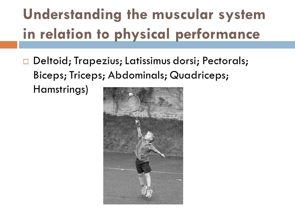Understanding the muscular system in relation to physical performance