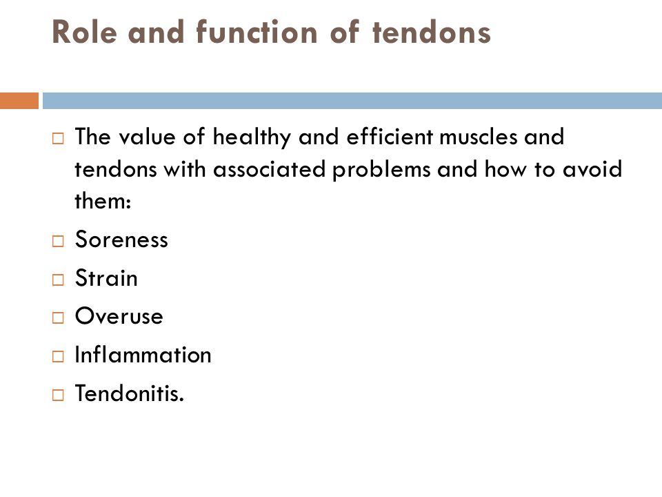 Role and function of tendons