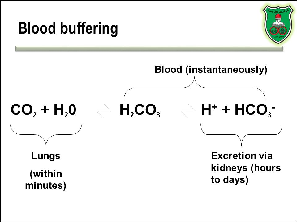 Blood buffering CO2 + H20 H2CO3 H+ + HCO3- Blood (instantaneously)