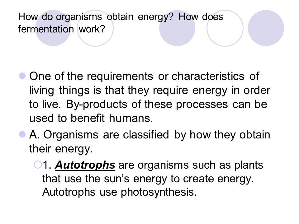 How do organisms obtain energy How does fermentation work