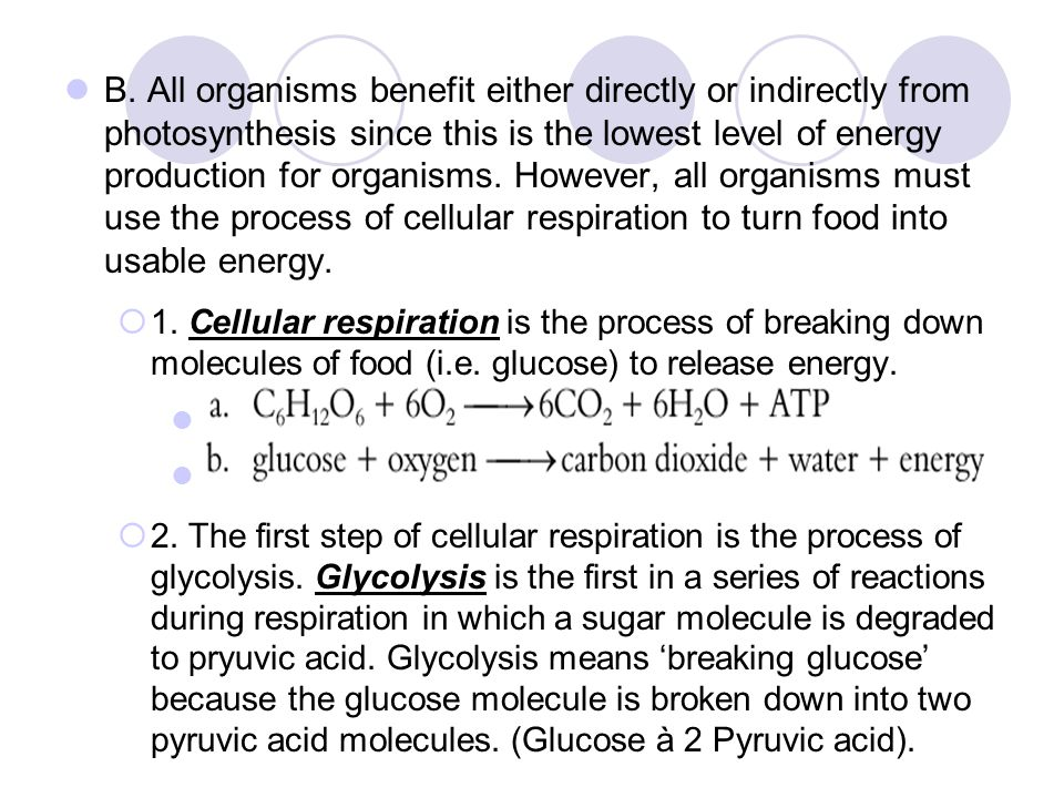 B. All organisms benefit either directly or indirectly from photosynthesis since this is the lowest level of energy production for organisms. However, all organisms must use the process of cellular respiration to turn food into usable energy.