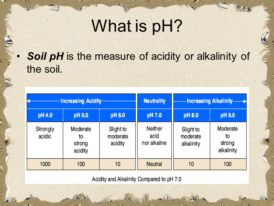 What is pH Soil pH is the measure of acidity or alkalinity of the soil.