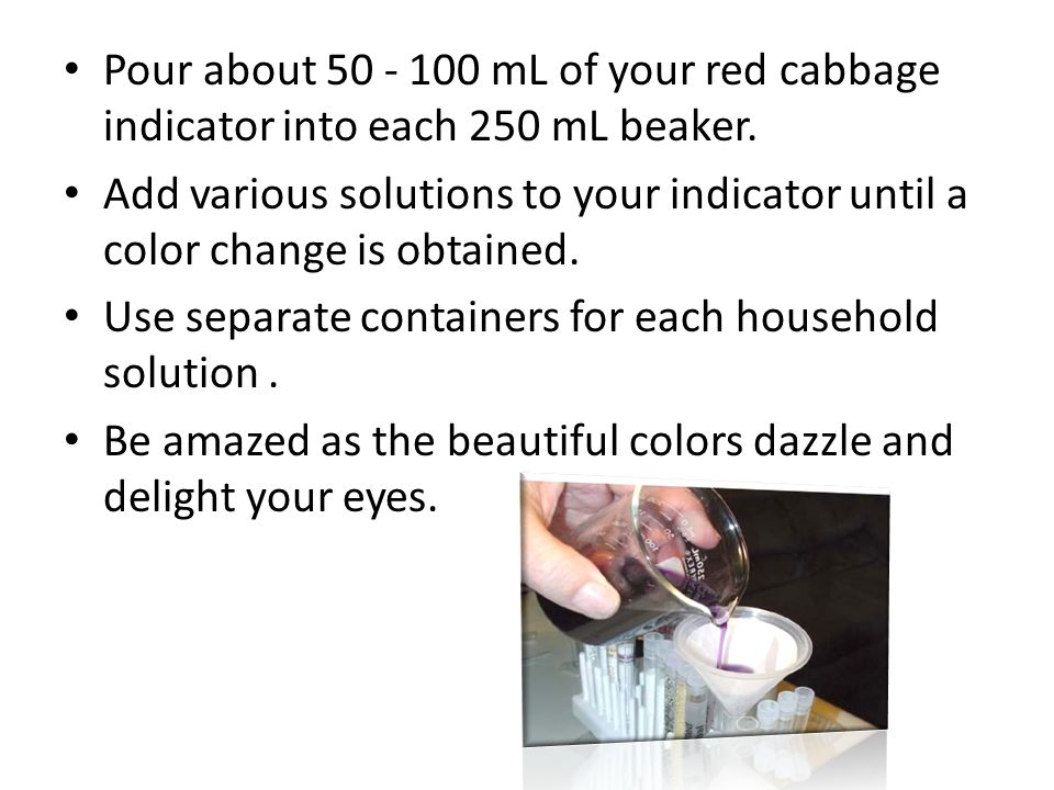 Pour about 50 - 100 mL of your red cabbage indicator into each 250 mL beaker.
