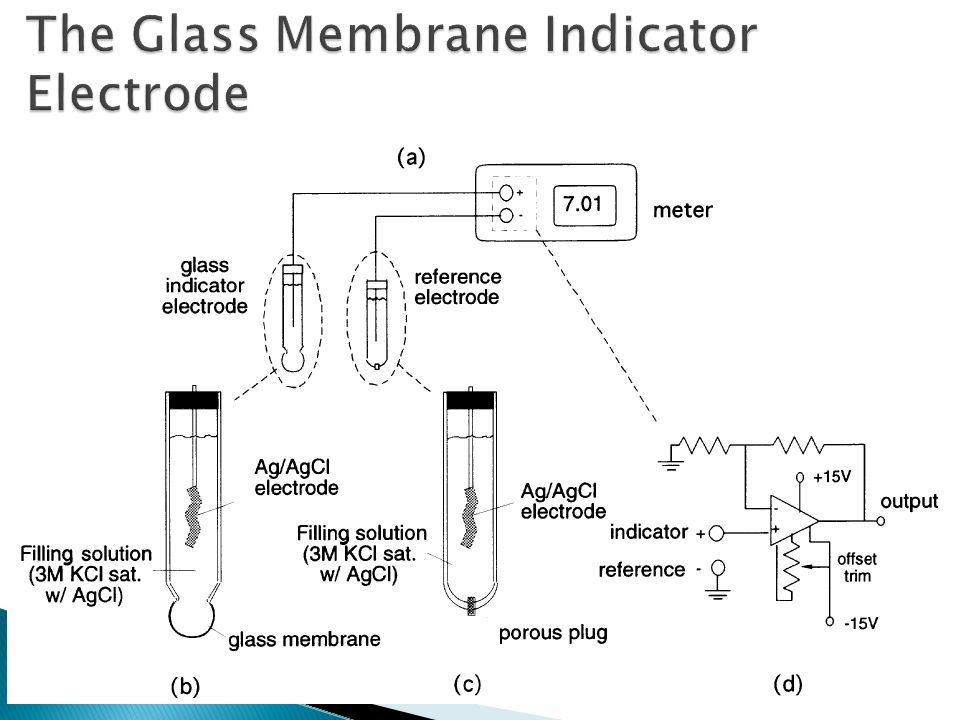 The Glass Membrane Indicator Electrode