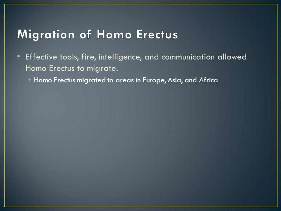 Migration of Homo Erectus
