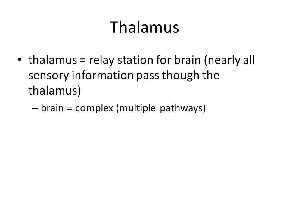 Thalamus thalamus = relay station for brain (nearly all sensory information pass though the thalamus)