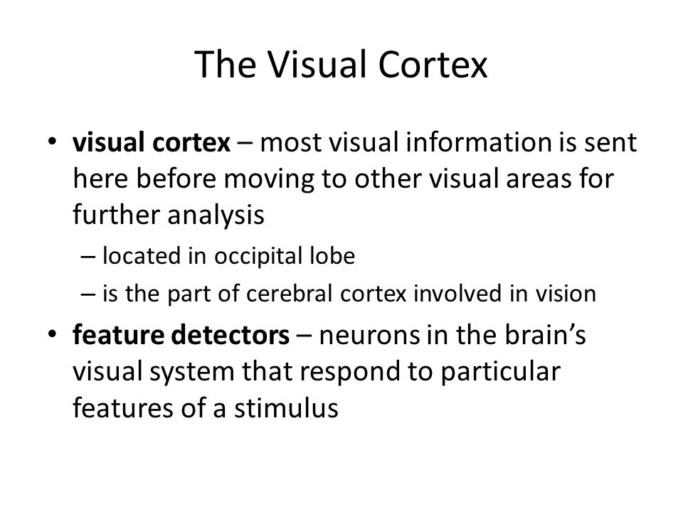 The Visual Cortex visual cortex – most visual information is sent here before moving to other visual areas for further analysis.