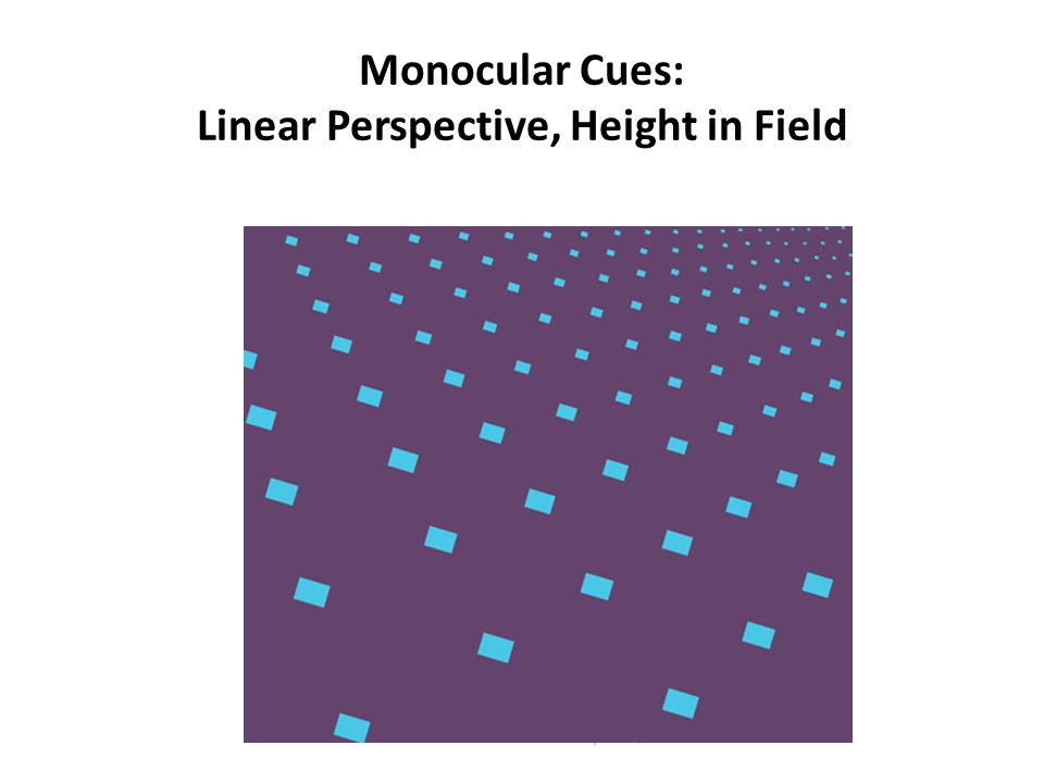 Monocular Cues: Linear Perspective, Height in Field