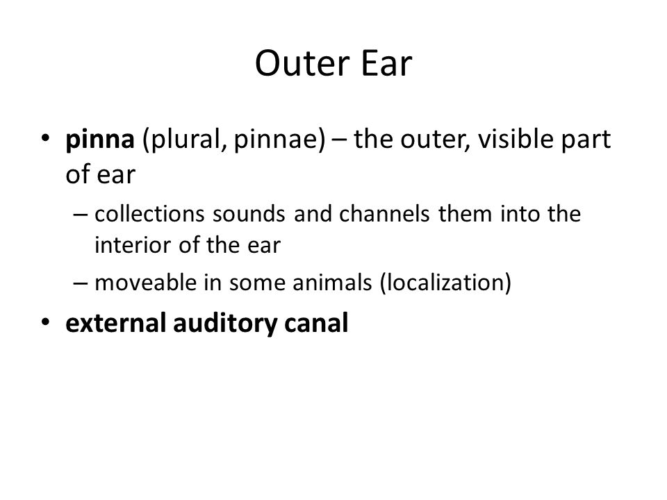 Outer Ear pinna (plural, pinnae) – the outer, visible part of ear