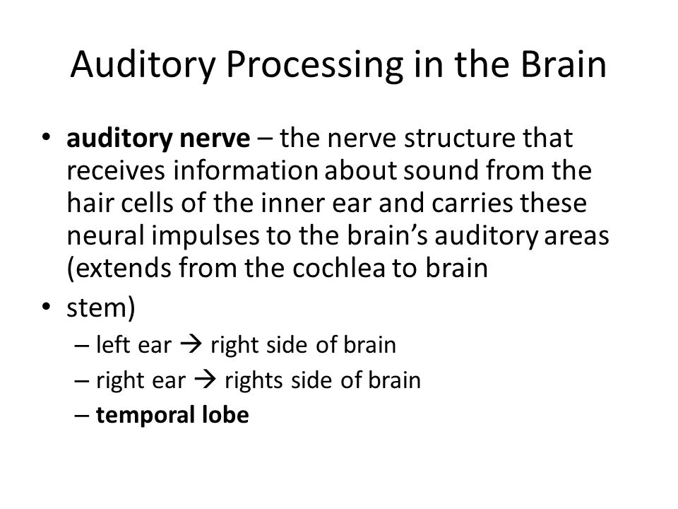 Auditory Processing in the Brain