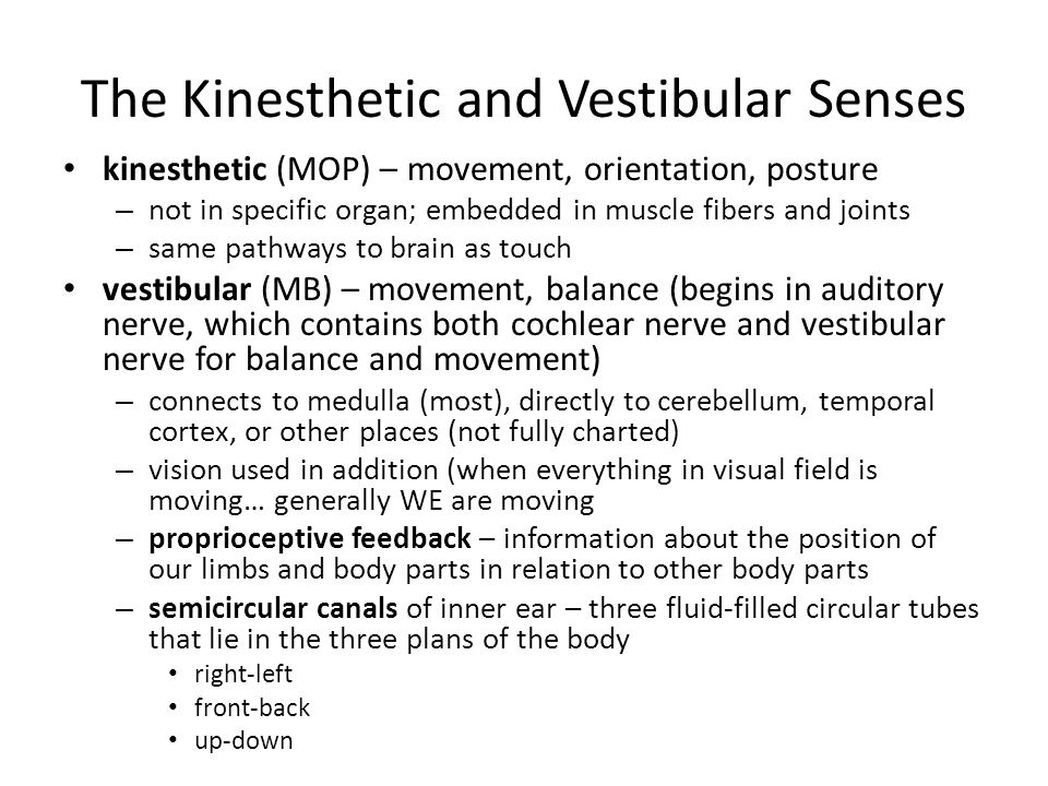 kinesthesis senses Kinesthesis refers to sensory input that occurs within the body proprioceptors are nerves which are located in your joints, tendons, and muscles that are working with the brain to let a person.