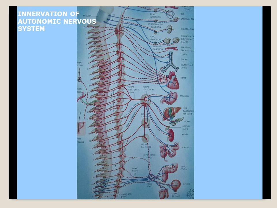 INNERVATION OF AUTONOMIC NERVOUS