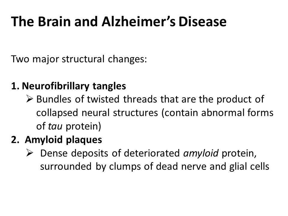 The Brain and Alzheimer's Disease