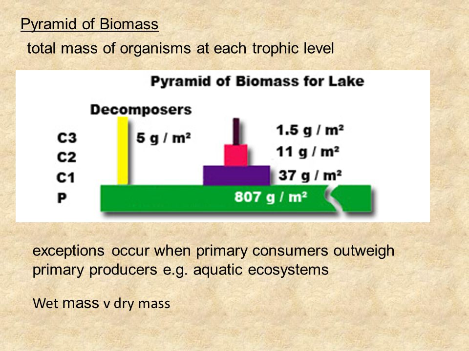 Pyramid of Biomass total mass of organisms at each trophic level.