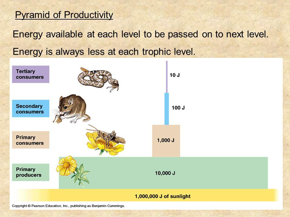 Pyramid of Productivity