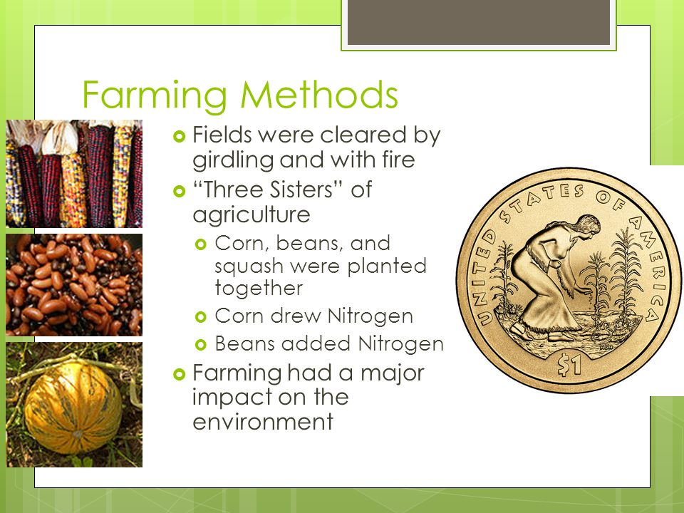 Farming Methods Fields were cleared by girdling and with fire