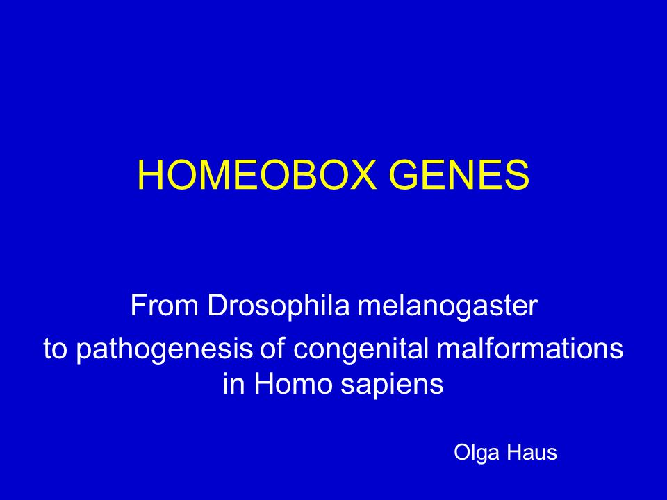 HOMEOBOX GENES From Drosophila melanogaster