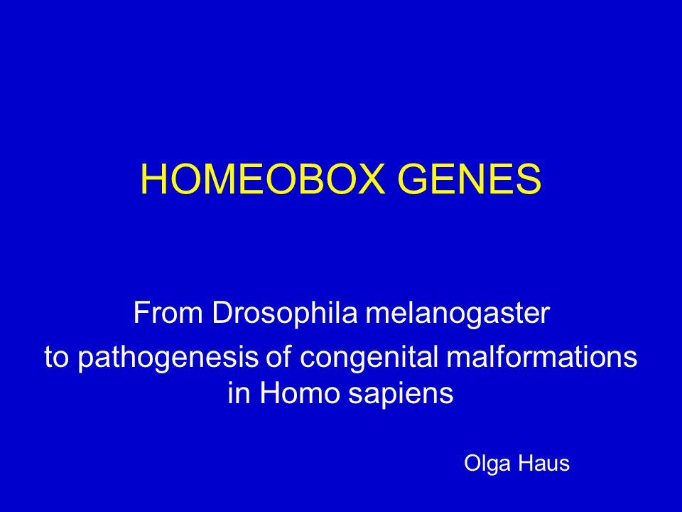 HOMEOBOX GENES From Drosophila melanogaster