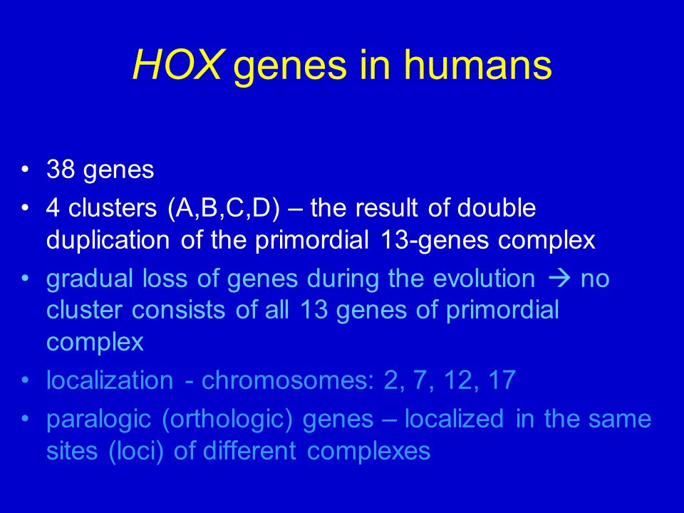hox genes Other articles where hox gene is discussed: evolution: evolution and development: all animals have hox genes, which may be as few as 1, as in sponges, or as many as 38, as in humans and other mammals.