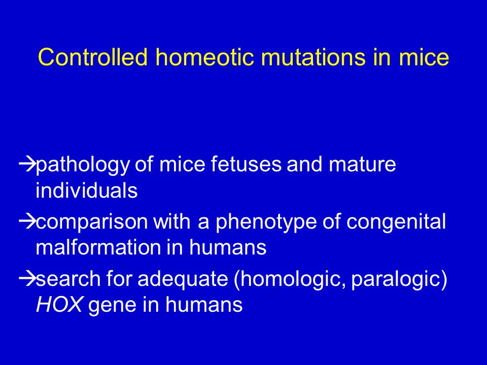 Controlled homeotic mutations in mice