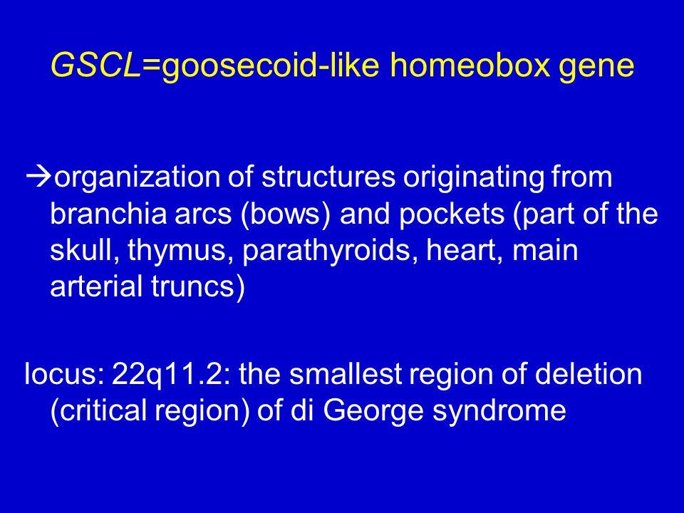 GSCL=goosecoid-like homeobox gene