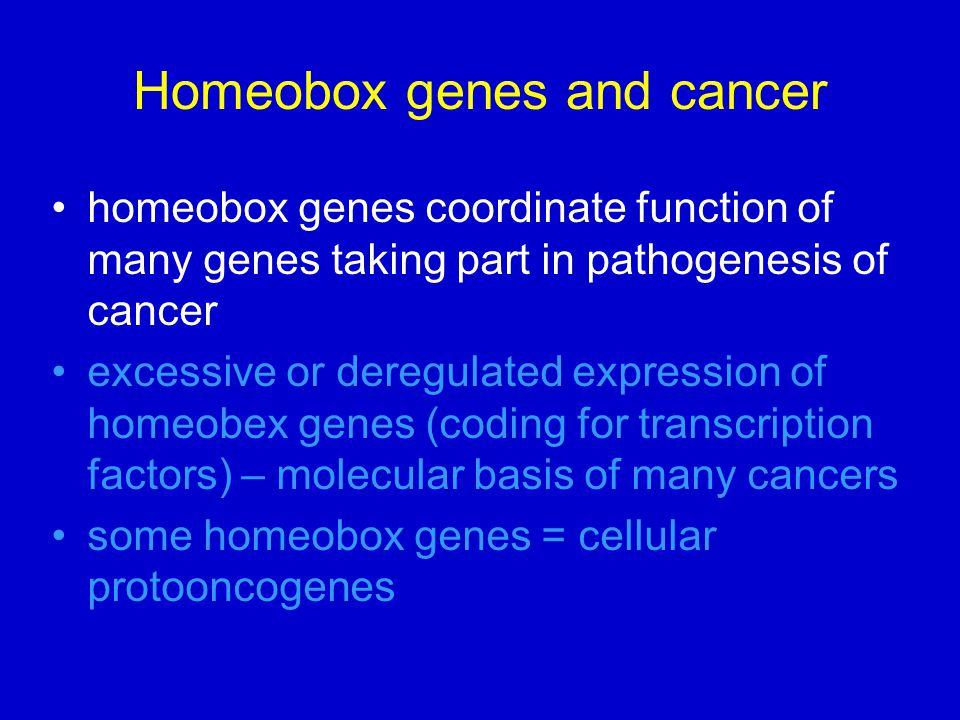 Homeobox genes and cancer