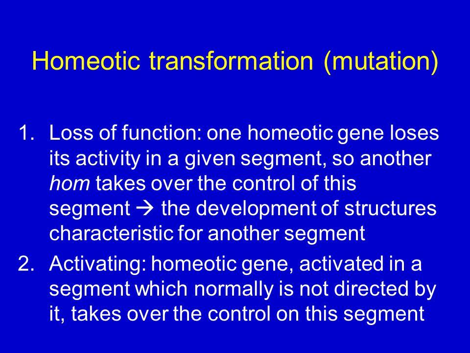 Homeotic transformation (mutation)