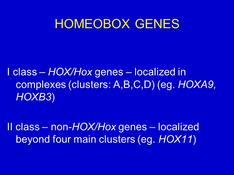 HOMEOBOX GENES I class – HOX/Hox genes – localized in complexes (clusters: A,B,C,D) (eg. HOXA9, HOXB3)