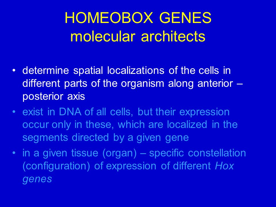 HOMEOBOX GENES molecular architects