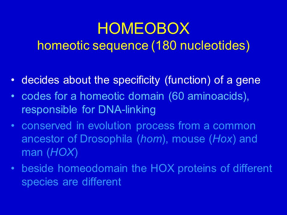 HOMEOBOX homeotic sequence (180 nucleotides)