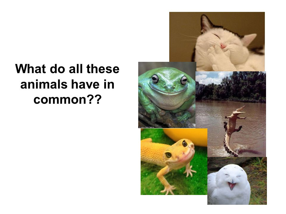 What do all these animals have in common