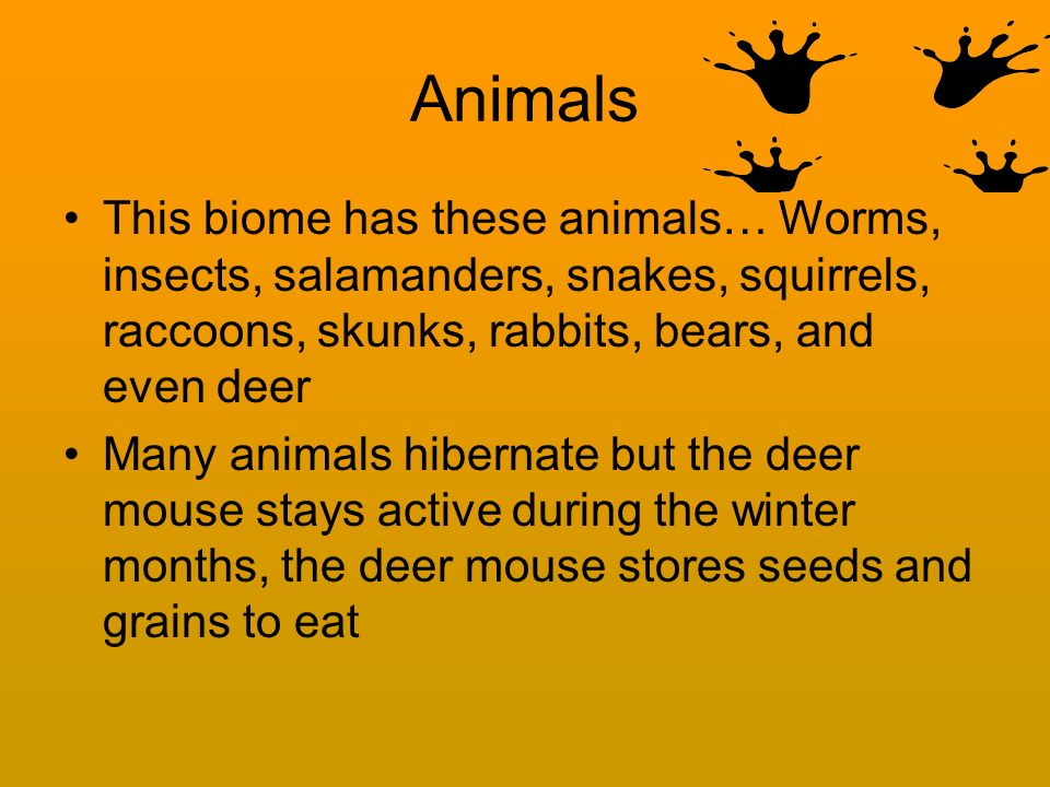 Animals This biome has these animals… Worms, insects, salamanders, snakes, squirrels, raccoons, skunks, rabbits, bears, and even deer.