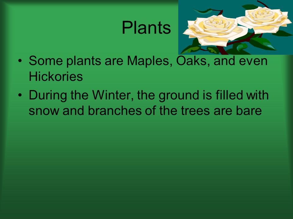 Plants Some plants are Maples, Oaks, and even Hickories