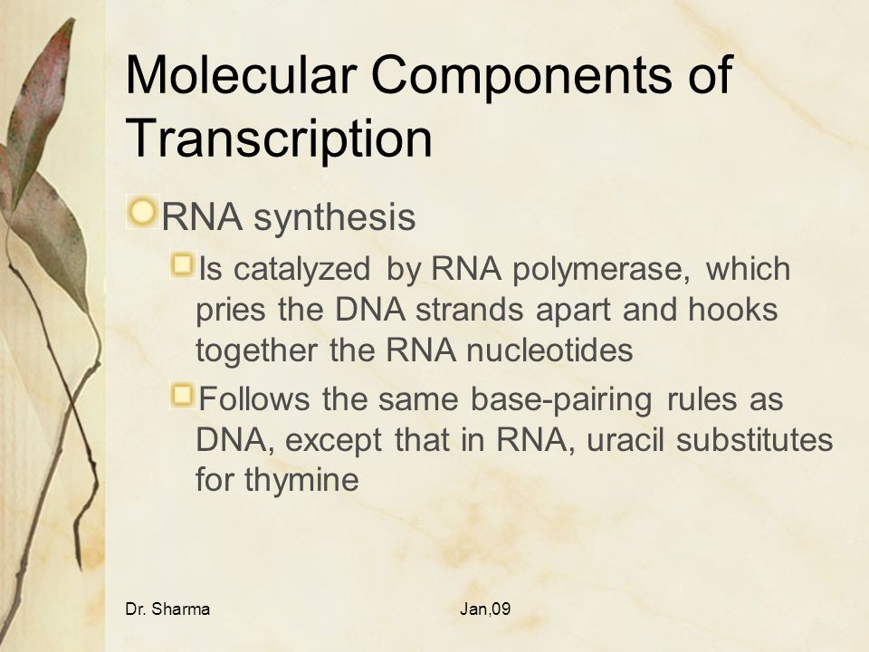 Molecular Components of Transcription