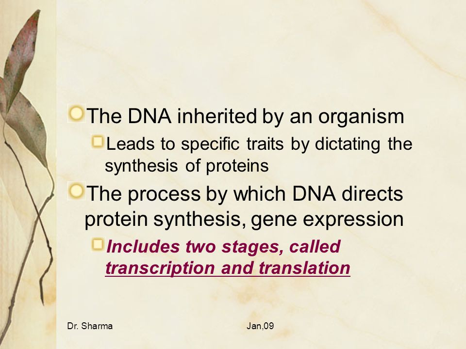 The DNA inherited by an organism