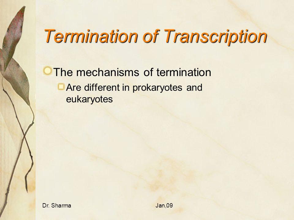 Termination of Transcription