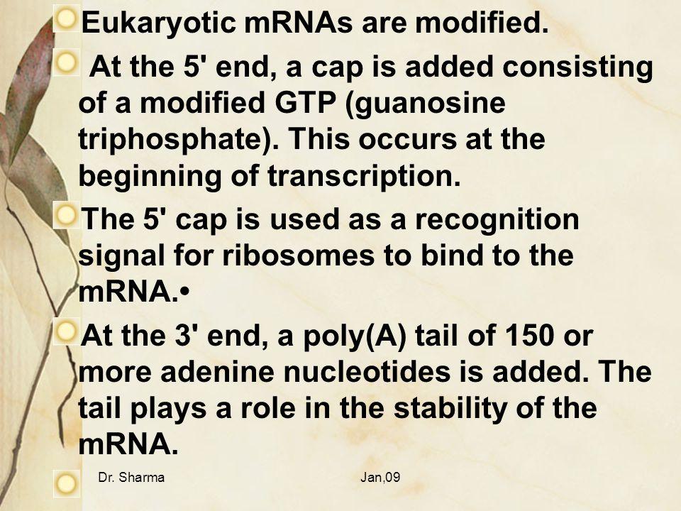 Eukaryotic mRNAs are modified.