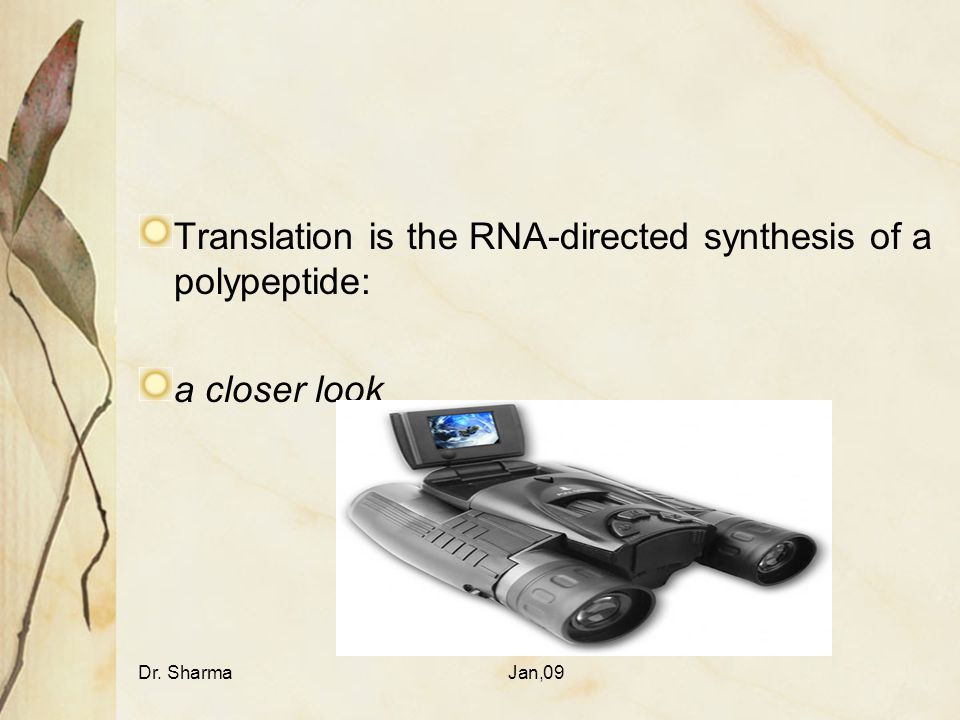 Translation is the RNA-directed synthesis of a polypeptide: