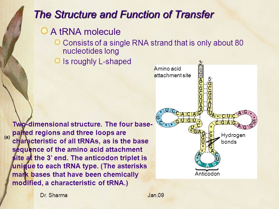 The Structure and Function of Transfer