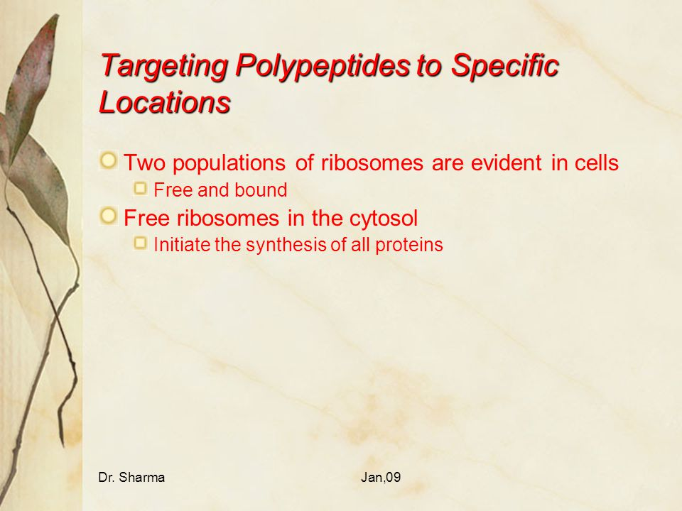 Targeting Polypeptides to Specific Locations