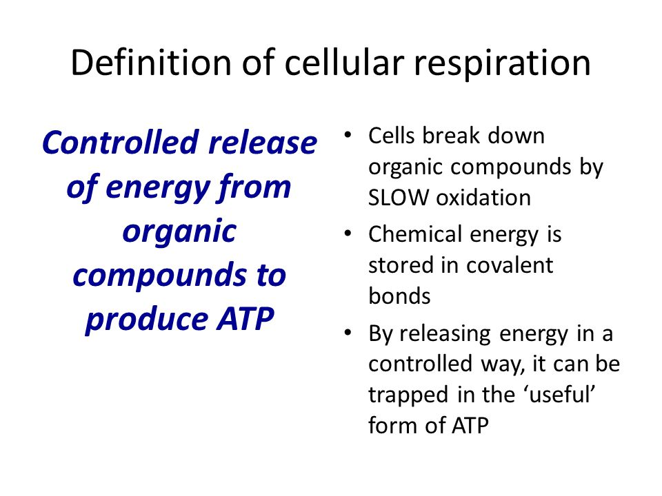 Definition of cellular respiration