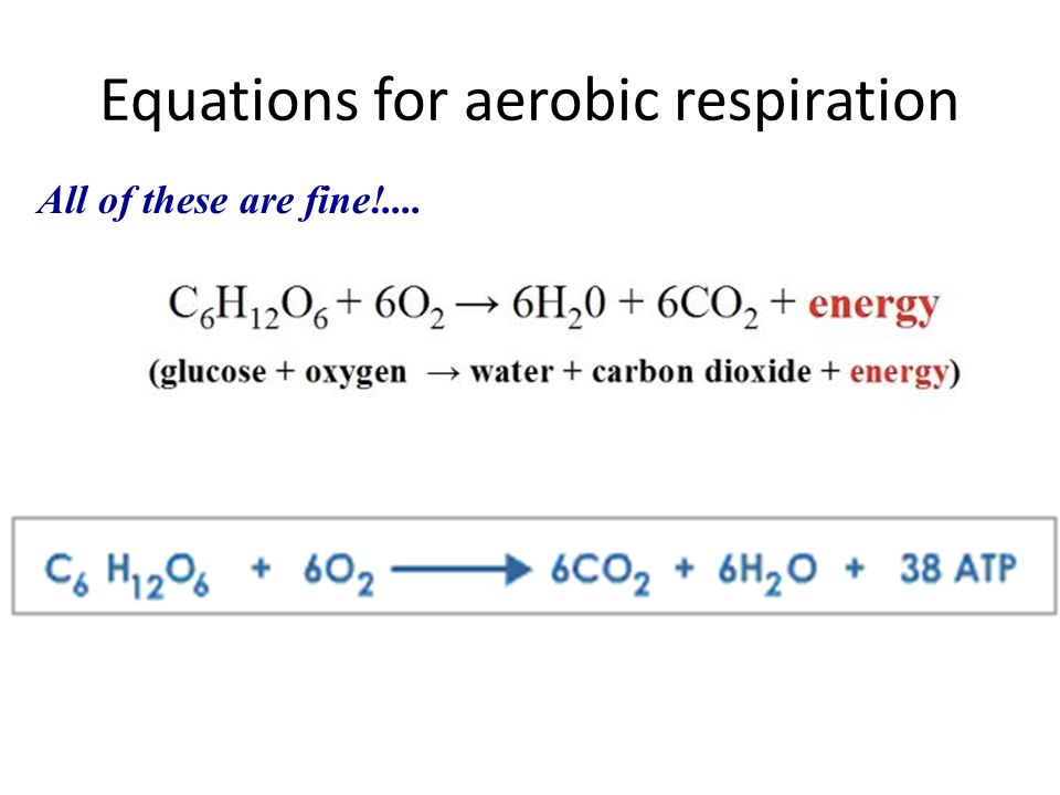 Equations for aerobic respiration