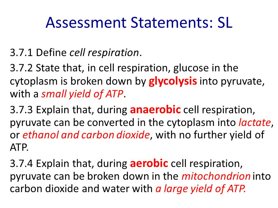 Assessment Statements: SL
