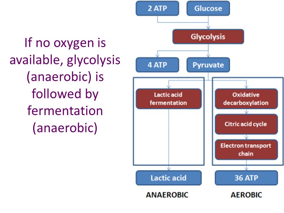 If no oxygen is available, glycolysis (anaerobic) is followed by fermentation (anaerobic)