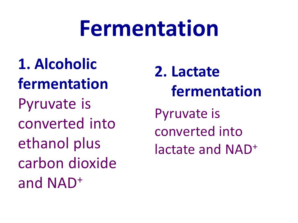 Fermentation 1. Alcoholic fermentation Pyruvate is converted into ethanol plus carbon dioxide and NAD+