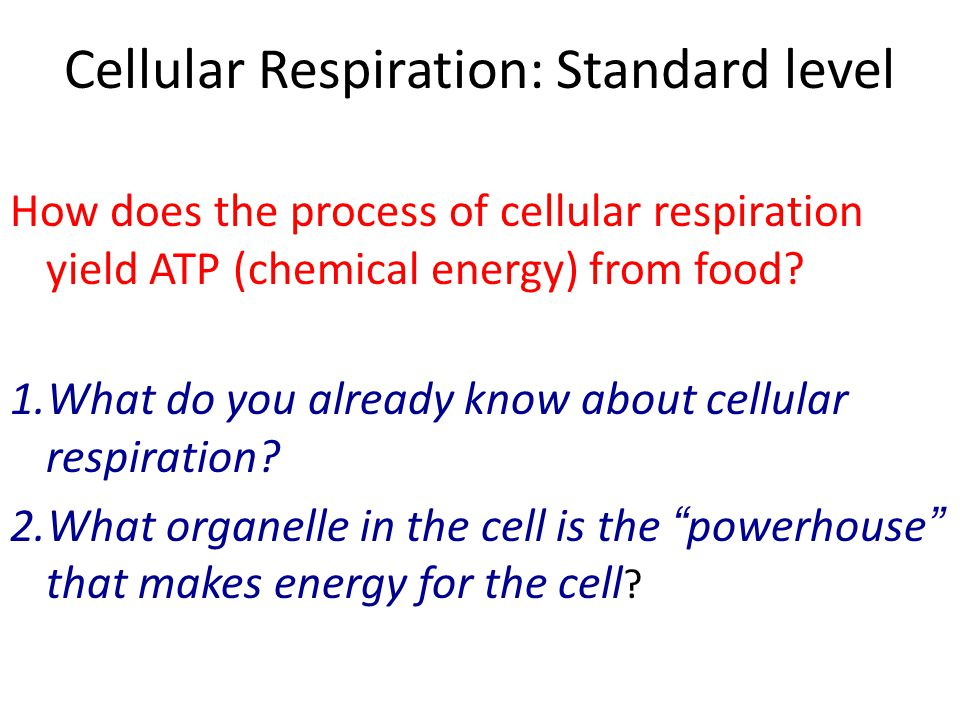 Cellular Respiration: Standard level